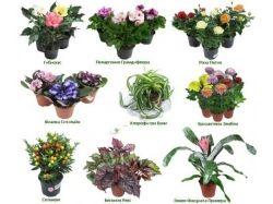 Домашние цветы в картинках с названиями