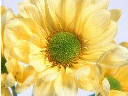 Фото больших букетов цветов 7