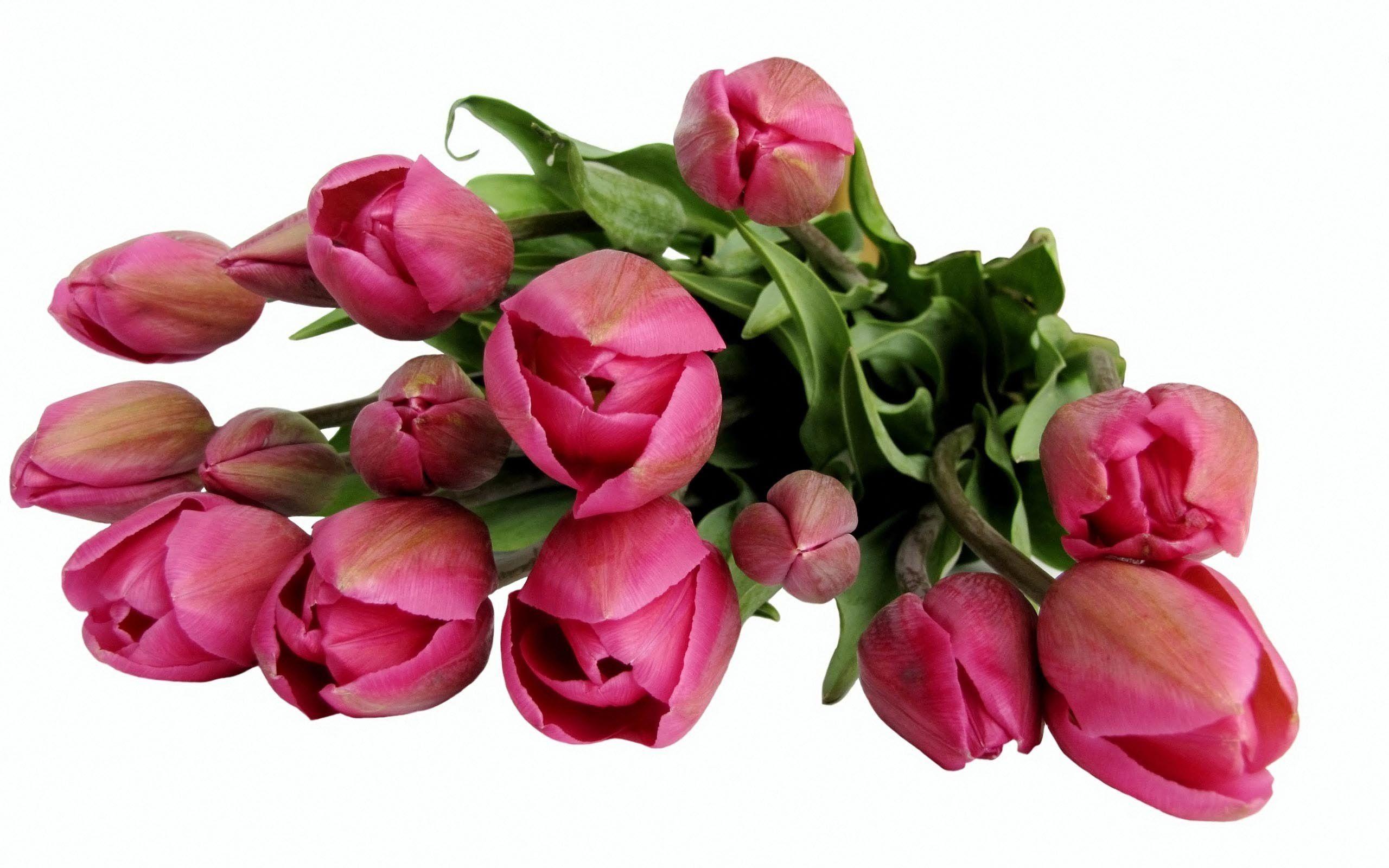 скажу, картинки цветов на 8 марта красивые на прозрачном фоне представлены все