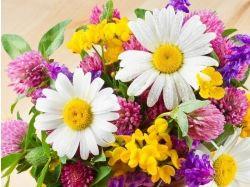 Фото хорошего качества цветы 1