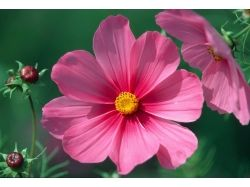 Фото хорошего качества цветы 2