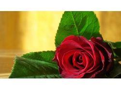 Фото хорошего качества цветы 3
