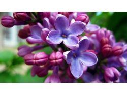 Фото хорошего качества цветы 5
