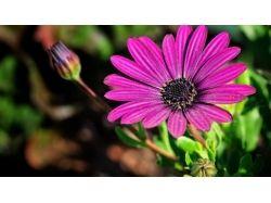 Фото хорошего качества цветы 6