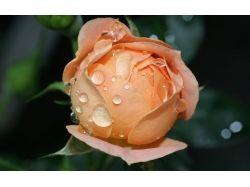 Фото хорошего качества цветы 7