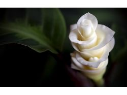 Фото хорошего качества цветы 8
