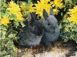 Картинки животные весной