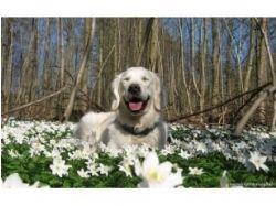 Картинки животные весной 2