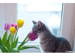 Картинки животные весной 4