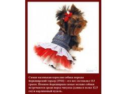 Красивые картинки про собак 3