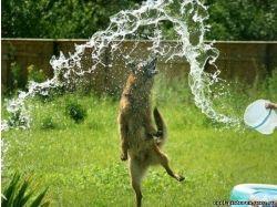 Красивые картинки про собак 4