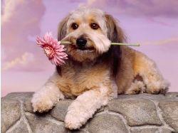 Красивые картинки про собак 6