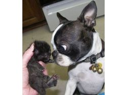 Красивые картинки про собак 8