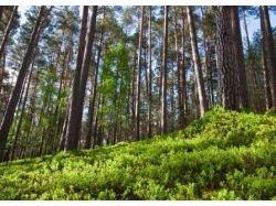 Что нельзя делать в лесу 2
