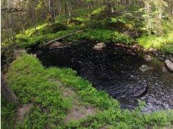 Что нельзя делать в лесу 6