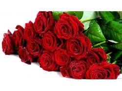 Картинки букет красных роз 4