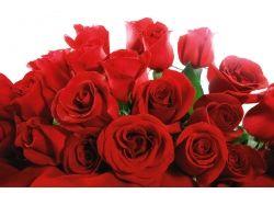 Картинки букет красных роз 6