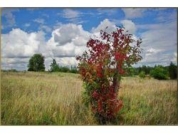 Картинки природы осени 4