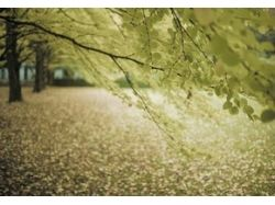 Картинки природы осени 8