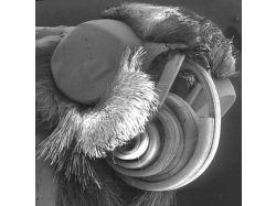 Микробы под микроскопом фото