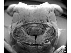Микробы под микроскопом фото 2