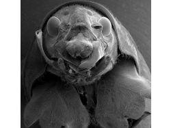 Микробы под микроскопом фото 3