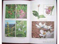 Растения россии красная книга 2