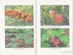 Растения россии красная книга 4