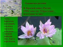 Растения россии красная книга 8