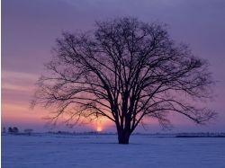 Обои зимы для рабочего стола