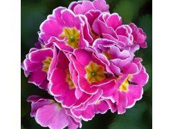 Фото красивых садовых цветов