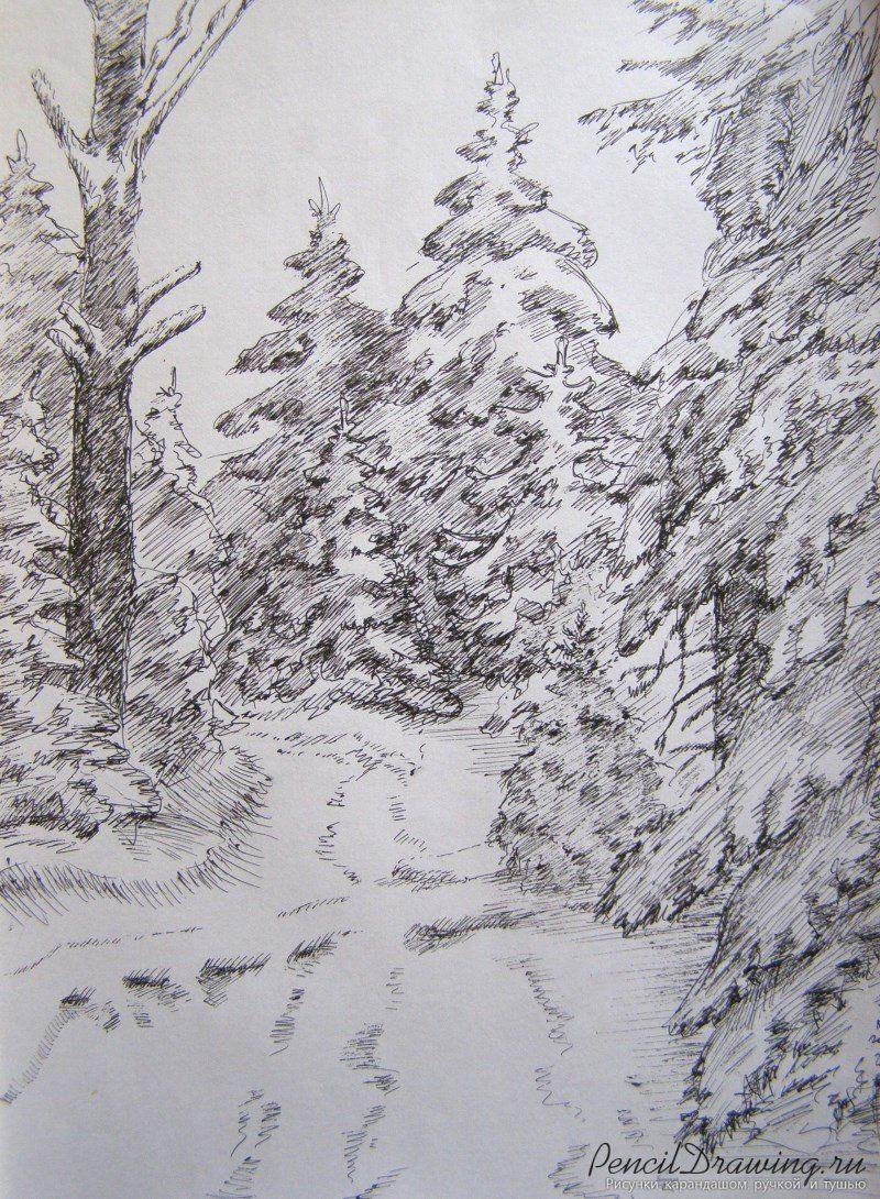 Для, день леса рисунок карандашом