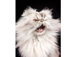 Картинки прикольные коты