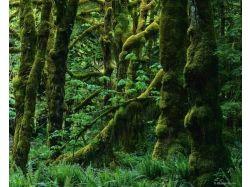 Фотографии лесов россии