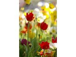 Фото красивых многолетних цветов