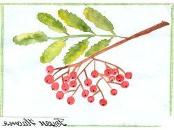 ягоды картинки для детей