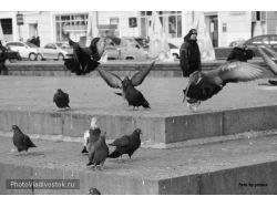Птицы приморского края фото