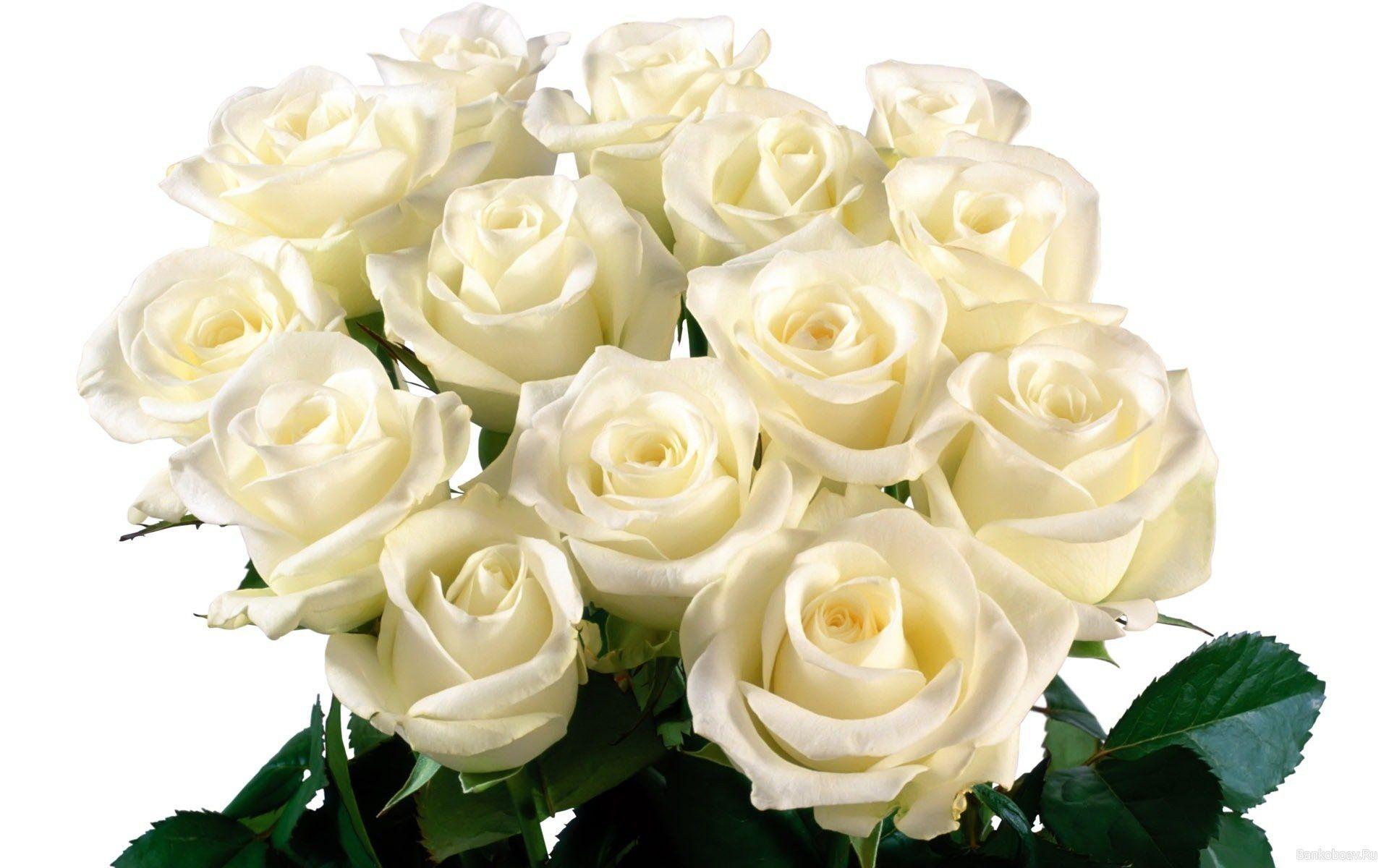 Белые розы картинки, свадебная тематика открытка