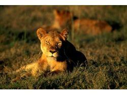Красивые профессиональные фотографии природы
