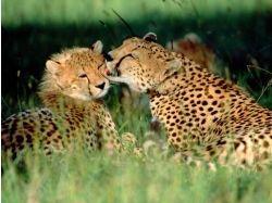 Целуются фото