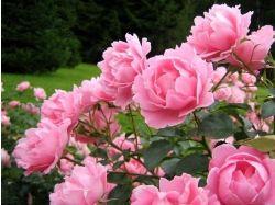 Цветы картинки смотреть онлайн бесплатно