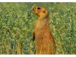 Картинки животных пустыни