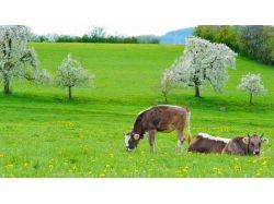 Заставки для рабочего стола весна скачать бесплатно