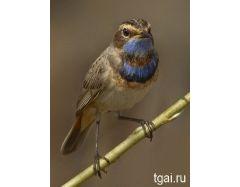 Картинки птиц на ветке