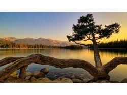 Картинки чудо дерево