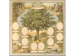 Семейное дерево картинка