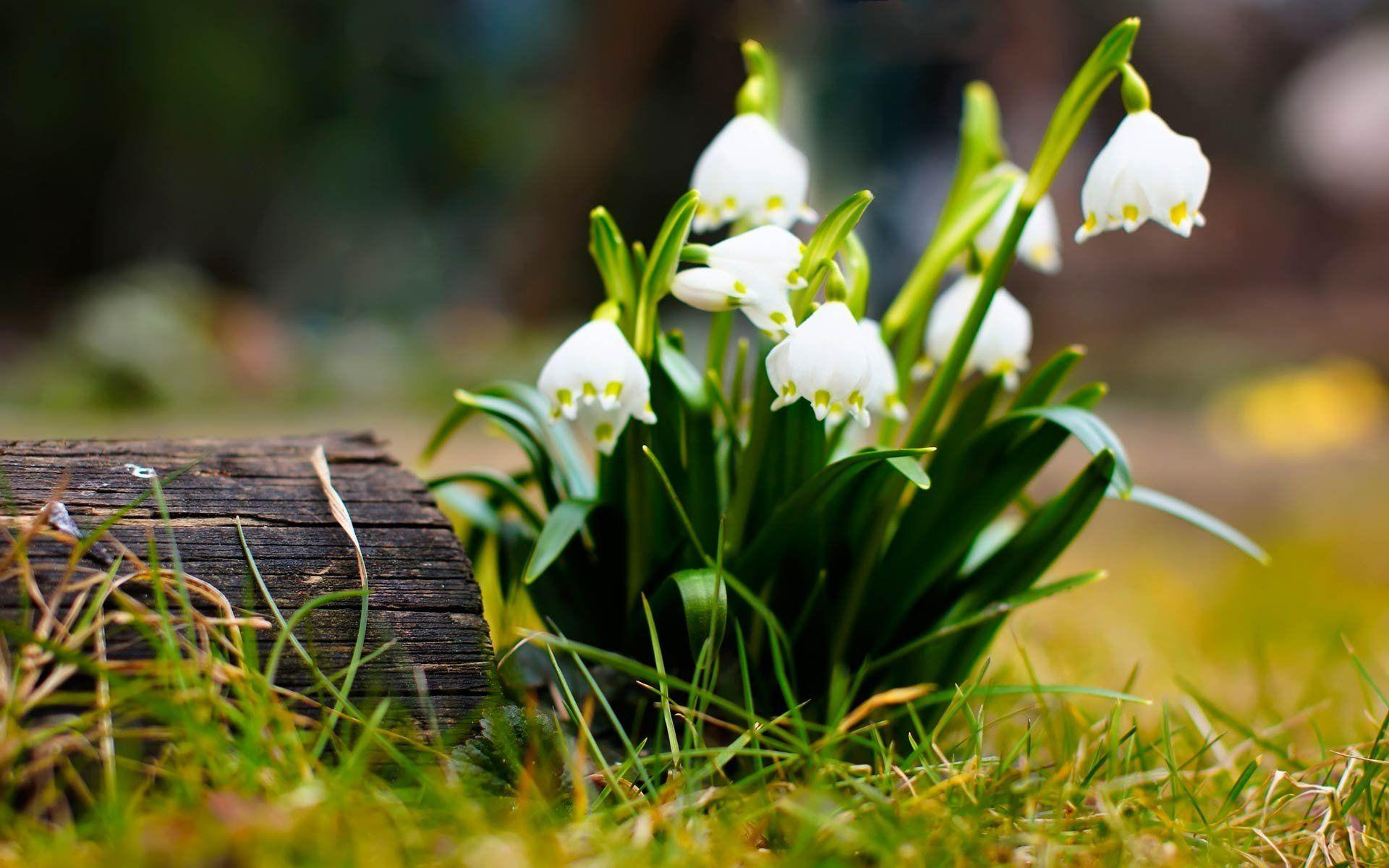 более двадцати картинки на рабочий стол красивые большие весна самый простой