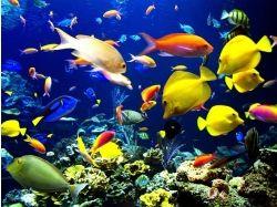 Подводный мир обои на рабочий стол