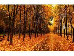 Осень фото высокого разрешения