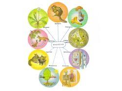 Картинки биология